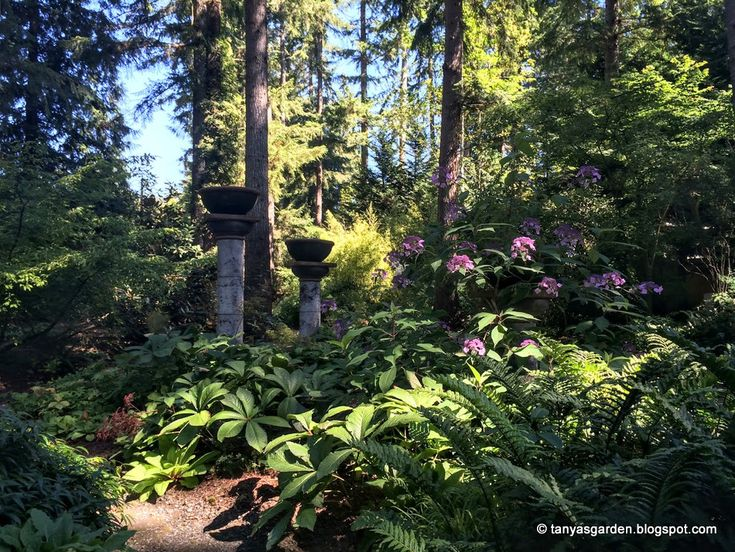50 Best Images About Heronswood Garden On Pinterest Gardens Washington State And Hedges