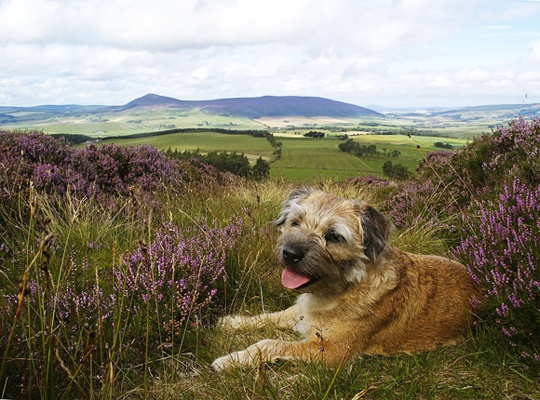 I'd love to take Hattie up to Scotland or over to Snowdonia for a portrait.