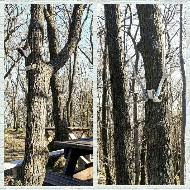 While walking in the woods we find this place where someone thoughtful installed this wonderfull coat hanger. Isnt it a great idea? 😃#farmhouse#farmhousedecor#farmhousestyle#wood#coathanger#trip#tree