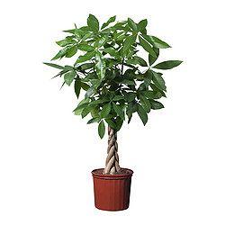 Plantes - Plantes et cache-pots d'extérieur - IKEA
