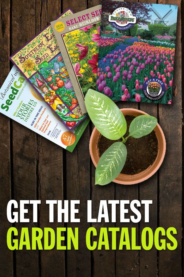 Do more than dream about spring, find your favorite garden catalogs in one place and start planning!