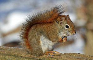 Squirrel Video - lovely squirrel