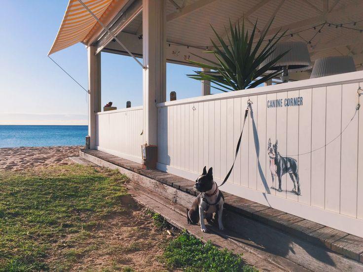 Dog Friendly Cafes in Sydney