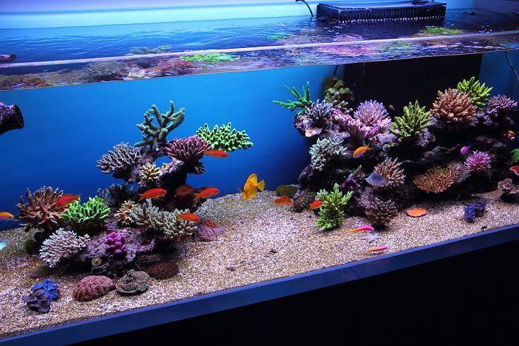 Top Reef Tank Aquascapes | Re: RSM 130D Top Aquascapes/FTS ...
