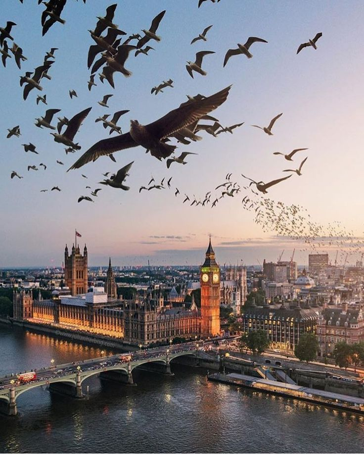 seagulls over London