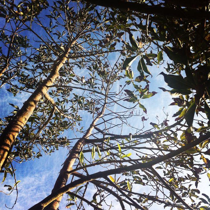 mirando pa' arriba.  #naturaleza