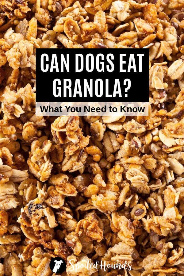 Can Dogs Eat Granola : granola, Granola?, About, Granola, Treats, Healthy,, Eating,, Treat, Recipes