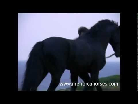 Amanecer ( Sunrise) Pura Raza Menorquina promotional Video, filmed on Menorca, protagonists are the wonderful Menorquin horses
