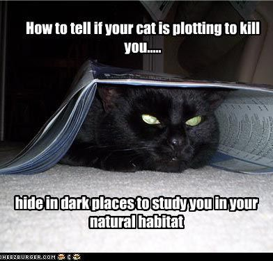 how to kill a cat Keeping your cat safe takes much more than just slapping on a collar cats are curious creatures always getting into mischief this is why we love them, of course, but it also means that they can endanger their own safety in the course of innocent play.