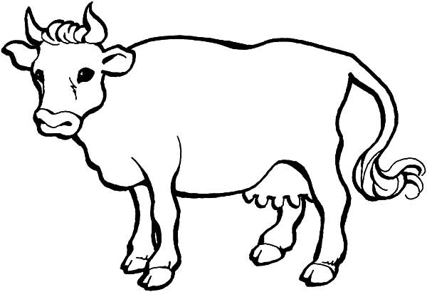Cows Drawing A Cows Coloring Pages Animal Coloring Pages