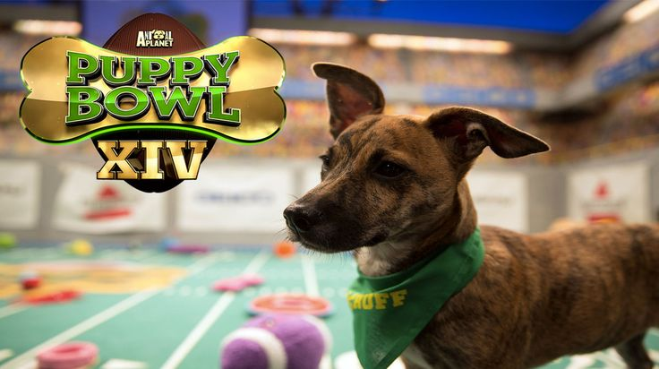 Puppy Bowl XIV Introduces 'Dog Bowl' for Adoptable Adults, Trading Cards    https://blog.shareyourpet.co.uk/puppy-bowl-xiv-introduces-dog-bowl-for-adoptable-adults-trading-cards/?utm_source=SocialAutoPoster&utm_medium=Social&utm_campaign=Pinterest