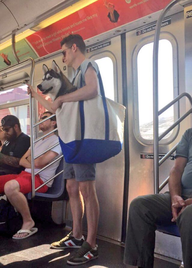 """Only in New York a person would put a huge dog in a bag on the subway cc: @Gothamist"""