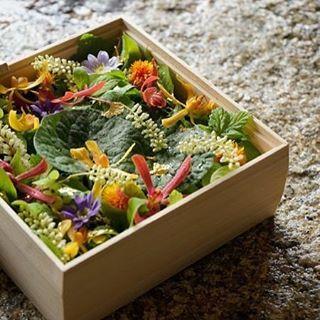 いいね!630件、コメント2件 ― みたて(京都 花屋)さん(@mitate_hanaya)のInstagramアカウント: 「母の日の贈り物 2 6寸・京の木箱「葵祭」 5000円 ・ ※5月2日締め切りです。みたてHPご注文フォームからご注文ください。 ・…」