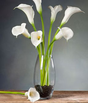 Calla Lily Large Silk Flower Stem - White