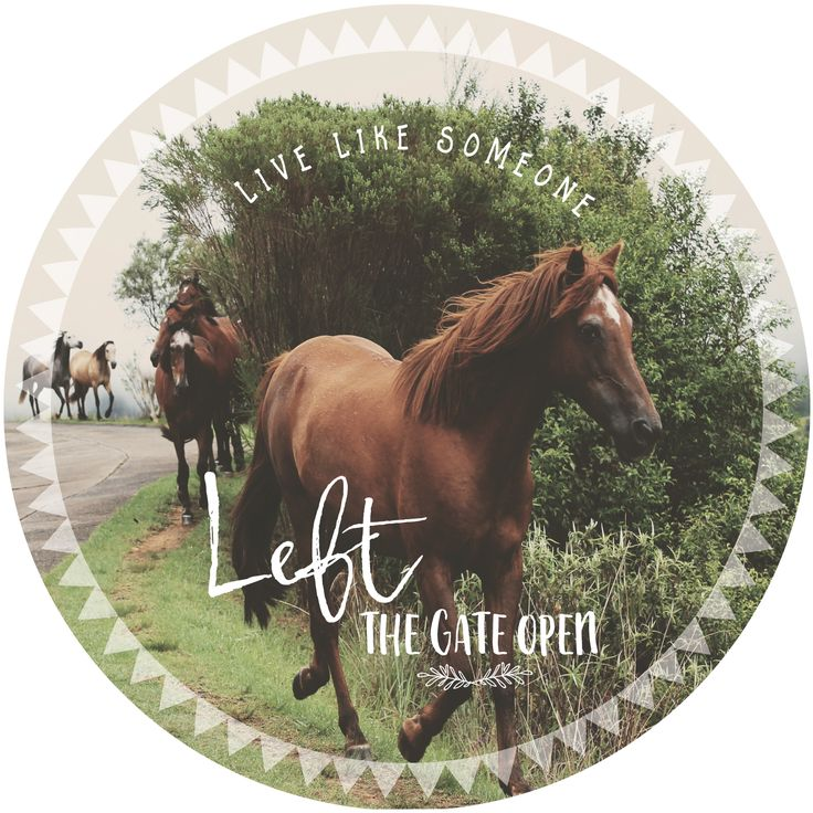 Live like someone...left the gate open. Wall decal fabric self-stick poster!
