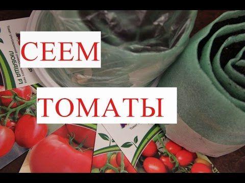 Томаты. Посев Томатов. Рассада в Улитке - Урожай Гарантирован!