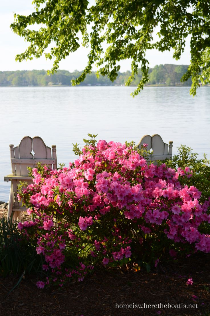 Azaleas by the lake.