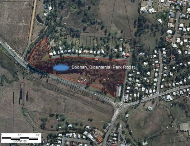Decommission the Boonah Flying-fox Roost Boonah QLD — Bats_Rule! Help Save WildLife