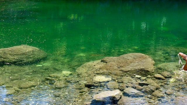 Fish in a lagoon at Petrohue Waterfalls #petrohue #patagonia #chile #bordemundo #puertovaras #fishing #trekking #southchile