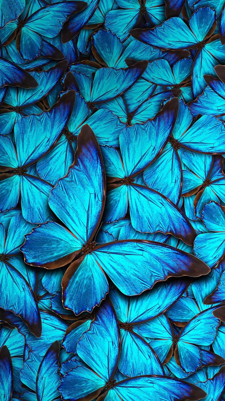 Blue Butterflies Wallpaper  Butterflies and Owls Wallpapers in 2019  Blue butterfly wallpaper
