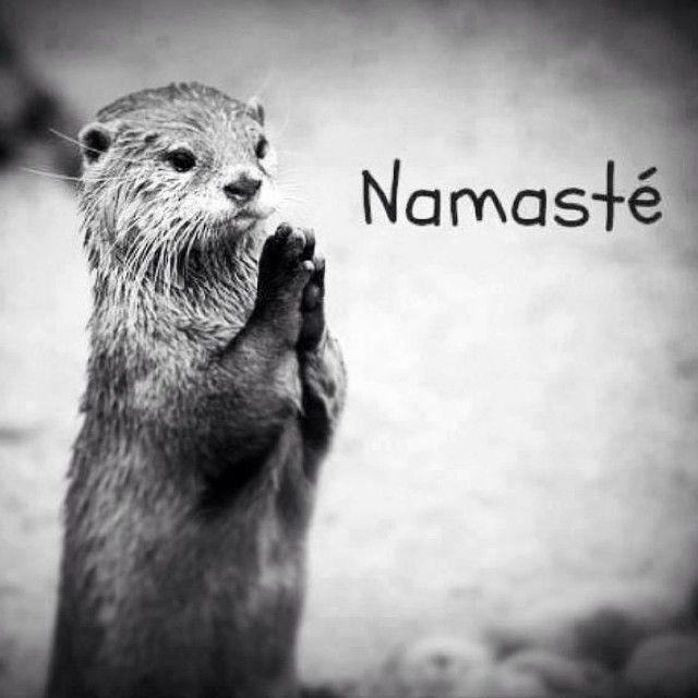 Love animals.                                                       …