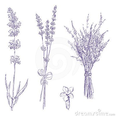 Lavender pencil drawing set