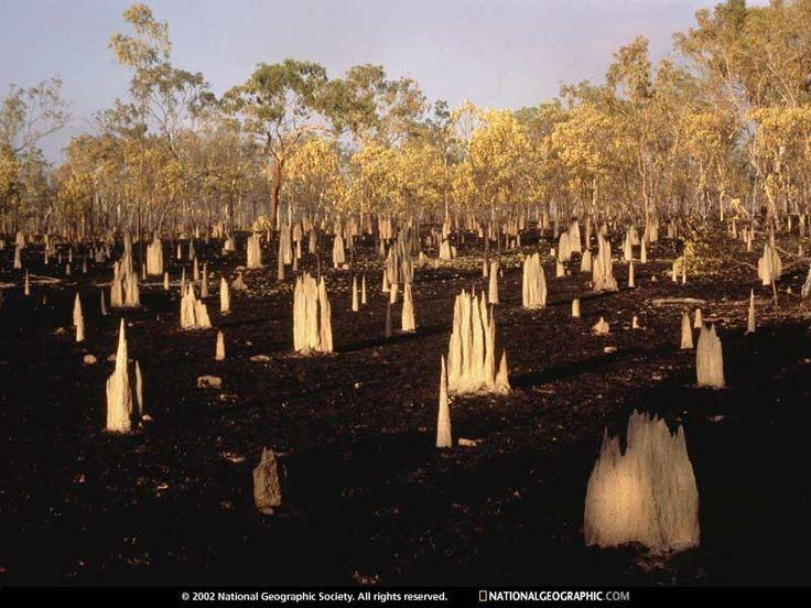 cape york termite mounds
