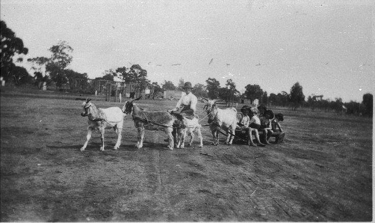 Goat Cart - Barellan, NSW - State Library of New South Wales