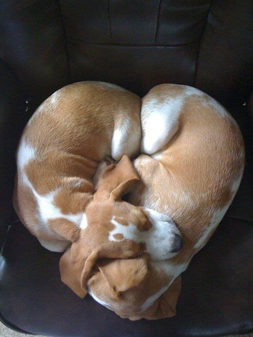 Two dogs; one heart.