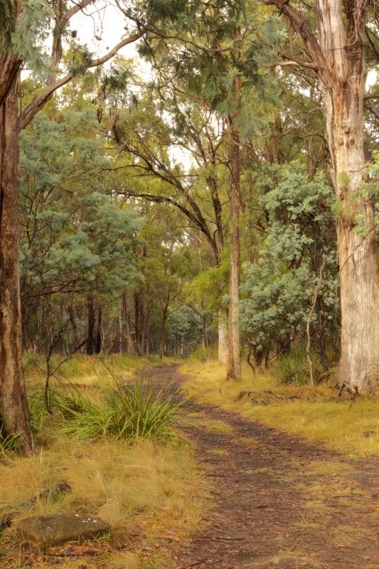Trevallyn Bushland, Tasmania