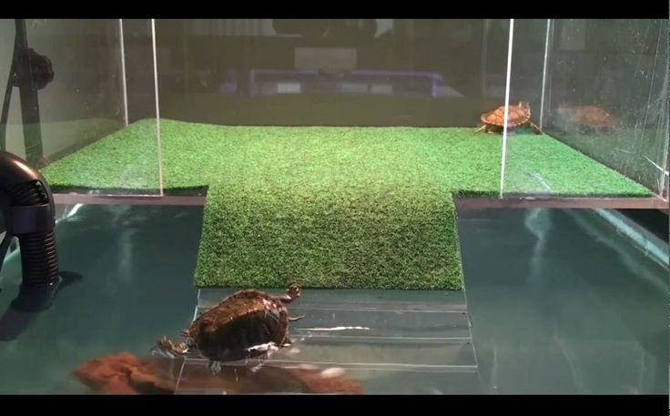Sliders First Visit To Acrylic Above Tank Basking Platform