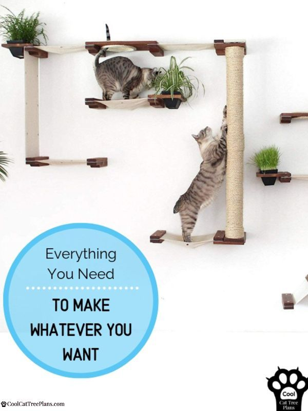 The Best Cat Wall Shelves Of 2020 And Why You Need Them In 2020