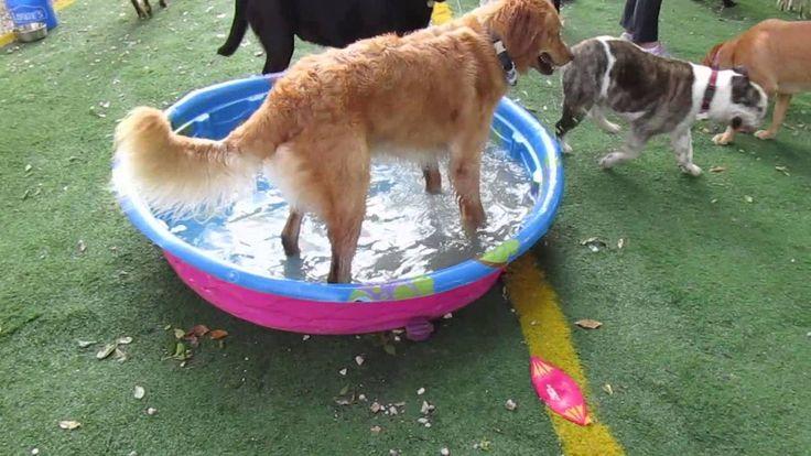 Maverick in the pool Dog daycare, Animal hospital