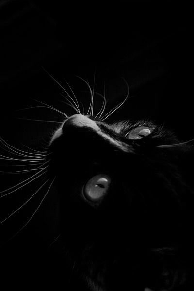 ☾ Midnight Dreams ☽ dreamy dramatic black and white photography - black cat