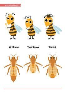 Dzień Pszczół – pakiet edukacyjny (pszczela rodzina)