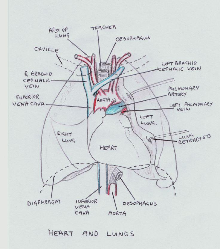 10 best orthopedic images on pinterest