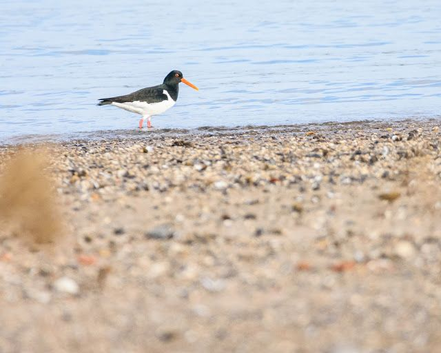 Claes`s Photo blog: low angle bird photography