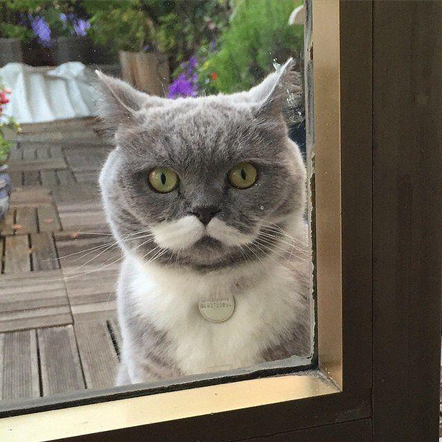 British cat instagram