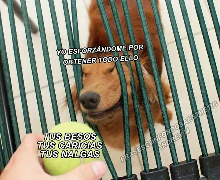 Cosas Graciosas Memes Divertidos Amor Animales Frases Frases Picaras