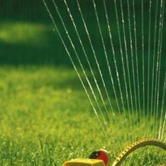 Homemade weed-and-feed lawn care will keep your lawn looking great, even through summer.