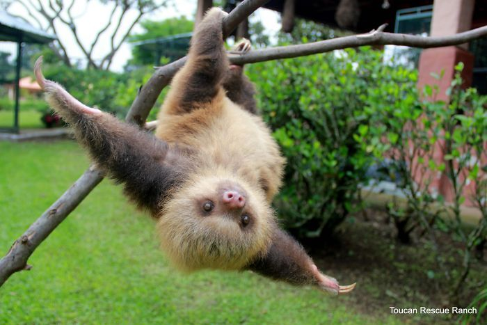 15+ Unbearably Cute Sloth Pics To Celebrate The International Sloth Day