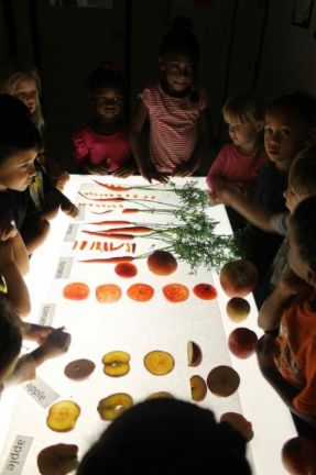 The children engaged in a complete collaborative and sensory experience by observing fruits and vegetables on the light table and then expressing their knowledge or seeds, sizes, and other characteristics in multiple ways - Little Wonders Learning Center