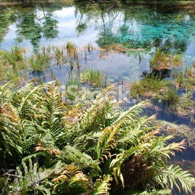 Pupu Springs Reflection, Golden Bay, New Zealand Royalty Free Stock Photo