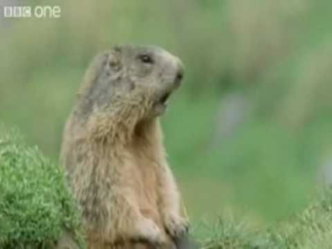 "Funny Talking Animals - Best Of!     The Show ""Funny Talking Animals - The Wild Site of Life"" by BBC One is all known!"