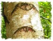 love eyes in trees