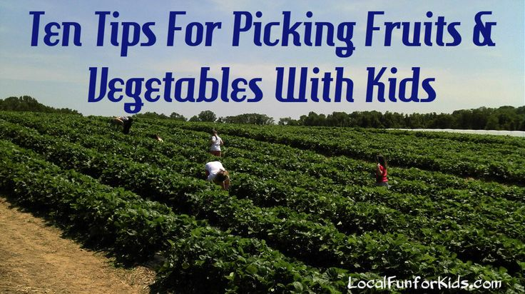 Go Local!  Pick Fruits &Vegetable With Your Kids at a Farm or Orchard.