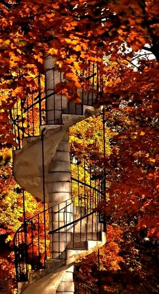 Don't you wonder where these stairs will take you?  On the other hand...who cares? I think I'd just climb slowly and soak in all the beauty of the place.