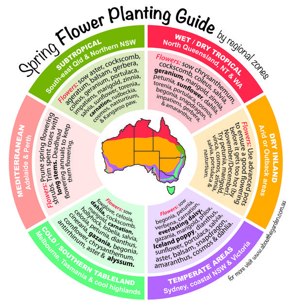 Spring Flower Planting Guide by temperate zones Australia  (http://www.aboutthegarden.com.au/index.php/spring-flowers-planting-guide-by-regional-zones/) #grownow #aboutthegarden