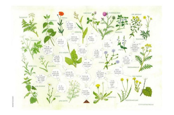 Zoekkaart Bermplanten