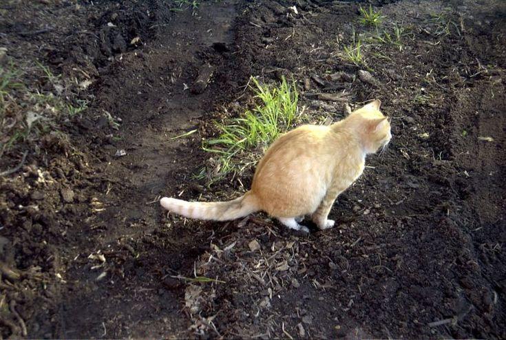 Altijd vreemde katten in je tuin? Met dit diervriendelijke trucje hou je ze weg!